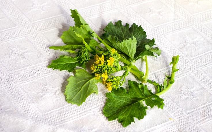 broccoli-4822674_960_720
